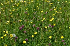 Sommerwiese, Dorset, England, Großbritannien Lizenzfreie Stockbilder
