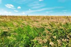 Sommerwiese an einem windigen Tag Stockbild