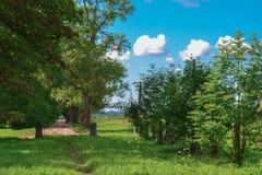 Sommerwiese mit einem kleinen Weg durch die Tore lizenzfreies stockfoto