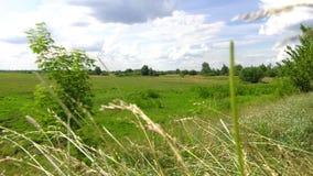 Sommerwiese mit einer Landstraße stock video