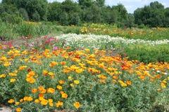 Sommerwiese mit hellen Blumen Stockfotografie