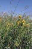 Sommerwiese weit von die Stadt des Johanniskrauts mit Blumen Lizenzfreie Stockfotografie