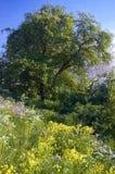 Sommerwildflowers und -bäume Stockbild