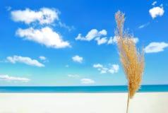 Sommerzeit Lizenzfreie Stockbilder