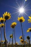 Sommerzeit-Blumen Stockfotos