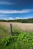 Sommerzeit an der Landschaft Lizenzfreie Stockfotos