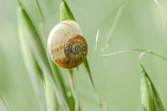 Sommerzeit-Grün-Feld von Toskana Lizenzfreies Stockbild