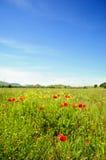 Sommerzeit mit Mohnblumen Lizenzfreies Stockfoto