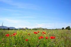 Sommerzeit mit Mohnblumen lizenzfreies stockbild