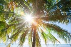 Sommerzeit, Sonnenstrahl, der durch Blätter glänzen und Niederlassungen von cocon lizenzfreie stockfotografie