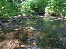 Sommerzeit, Strom im Wald Stockbilder
