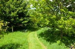 Sommerzeitbäume und -wege Stockfotos