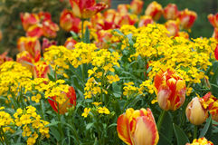 Sommerzeitblumenwiese Lizenzfreie Stockbilder