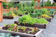 Sommerzeitkraut- und Gemüsegarten lizenzfreies stockbild