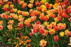 Sommerzeitwiese mit den gelben und roten hellen Blumen Lizenzfreies Stockbild