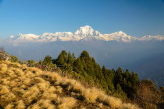 Sommet d'Annapurna avec la vue de Poonhill, drapeaux de prière de Tibétain images libres de droits