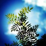 Sommige bladeren op een zonnige dag Royalty-vrije Stock Fotografie