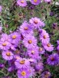 Sommige bloemen Stock Afbeelding