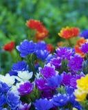 Sommige bloemen in de tuin stock foto's