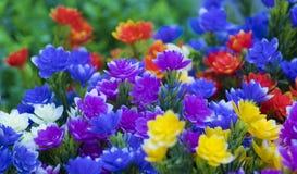 Sommige bloemen in de tuin royalty-vrije stock fotografie