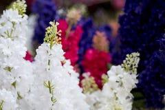 Sommige bloemen in de tuin stock foto