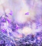Sommige bloemen verzachten lilac klokkenbos in het natuurlijke milieu Het artistieke teruggeven, zachte pastelkleuren Stock Foto's
