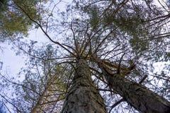 Sommige bomen Stock Afbeeldingen