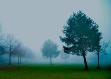 Sommige bomen bekijken op de nevelige ochtend royalty-vrije stock afbeelding