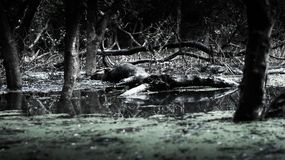 Sommige boom en installaties bevinden zich op het meer er heeft één of andere gebroken boom Royalty-vrije Stock Foto