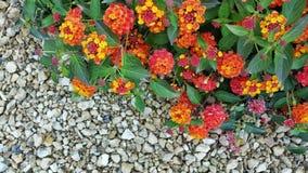 Sommige gekleurde bloemen op het gruis Stock Afbeeldingen