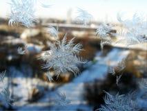 Sommige ijskristallen op glassanta verlieten ons stock foto's