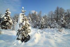 Sommige Kerstmisbomen stock afbeeldingen