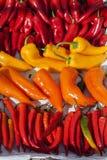 Sommige kleine peper bij straatmarkt Royalty-vrije Stock Fotografie
