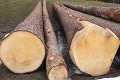 Sommige lange bomen met jaarlijks-ringen Royalty-vrije Stock Foto's