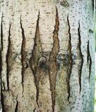 Sommige Stroken in de boomstam van een boom royalty-vrije stock foto's