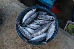 Sommige verse die vissen door vissers worden gevangen worden geplaatst binnen het bassin royalty-vrije stock afbeelding