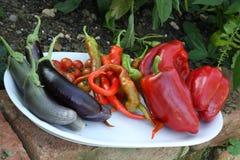 Sommige verse keuken plantaardige vruchten Stock Fotografie