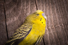 Sommige vogels moeten niet worden gekooid stock foto's