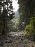 sommossa della natura Fotografie Stock