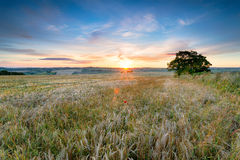 Somsert Countryside. Stunning sunset over farm fields of ripe barley in the Somerset countryside near Faulkland stock photo