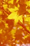 Son automne Photo stock
