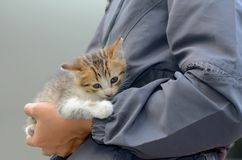 Son cat. Little cat on women hand Royalty Free Stock Photos