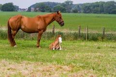 Son cheval et bébé Image stock
