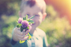 Son gives mom flowers. Son gives mom a bunch of purple clover stock photos