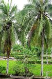 Son My, Vietnam - March 23, 2016: The My Lai Massacre memorial site. The My Lai massacre was the Vietnam War mass killing of betwe Stock Photo