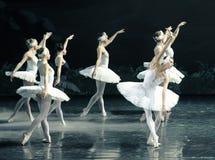 Son Ojta navré est revenu au lac swan de tribu-ballet de cygne Image libre de droits