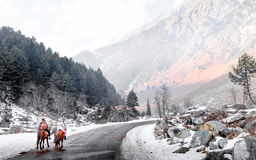 Sonamarg, Kashmir, India. View of Sonamarg With Snow Royalty Free Stock Images
