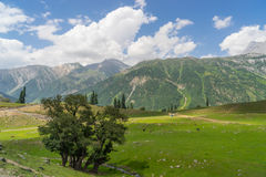 Sonamarg mountain landscape, Jammu Kashmir. India Stock Image