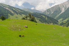 Sonamarg mountain landscape in summer. India Royalty Free Stock Images