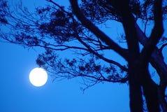 Sonata di luce della luna fotografie stock